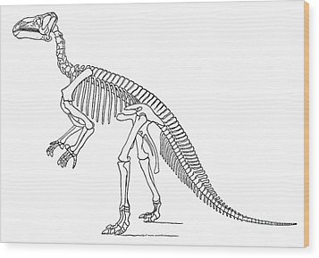 Iguanodon, Mesozoic Dinosaur Wood Print by Science Source