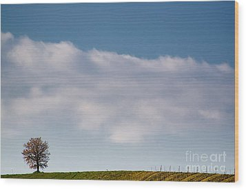 Lonely Tree Wood Print by Mats Silvan