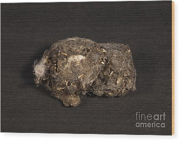 Owl Pellet Wood Print by Ted Kinsman