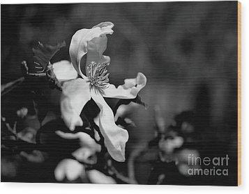 White Magnolia Wood Print by Dariusz Gudowicz