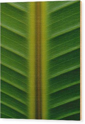 Wild Banana Leaf Wood Print