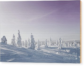 Winter Wood Print by Kati Molin