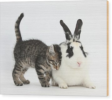 Kitten And Rabbit Wood Print by Mark Taylor
