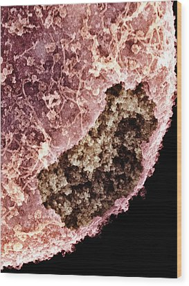 Cell Nucleus, Sem Wood Print by