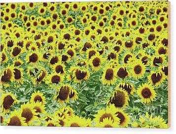 Field Of Sunflowers Wood Print by Bernard Jaubert
