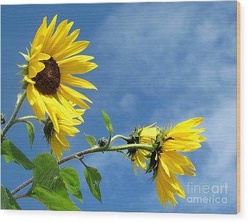 Sunflowers Wood Print by France Laliberte