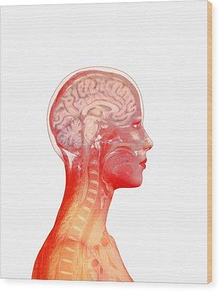Brain Wood Print by Mehau Kulyk