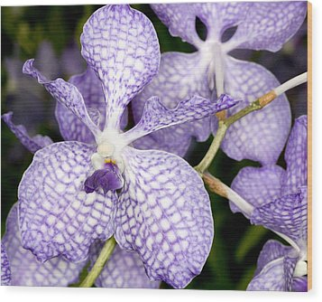 Wood Print featuring the photograph Orchid Flower Bloom by C Ribet
