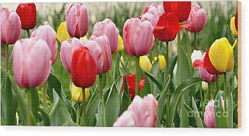 Tulip Garden University Of Pittsburgh  Wood Print by Thomas R Fletcher