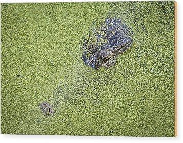 Alligator Untitled Wood Print by Patrick M Lynch