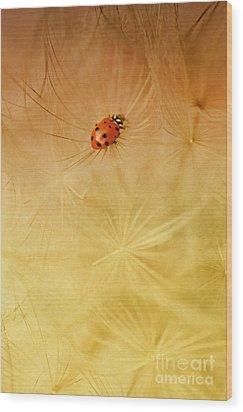 Dandelions Wood Print by Iris Greenwell