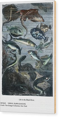 Verne: 20,000 Leagues Wood Print by Granger
