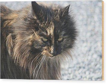 Cat Portrait Wood Print by Valia Bradshaw