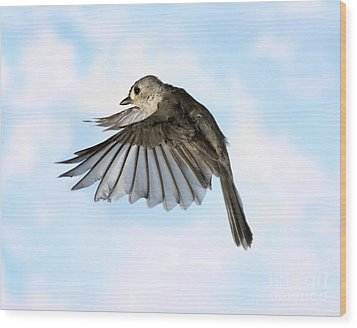 Tufted Titmouse In Flight Wood Print by Ted Kinsman