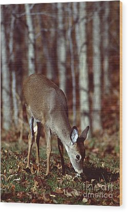 Wood Print featuring the photograph White-tailed Deer by Jack  R Brock