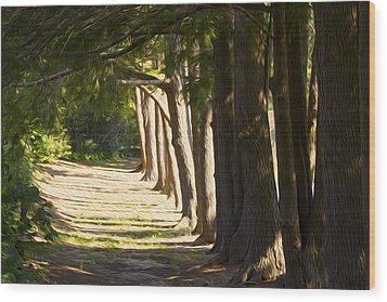 9am Sun Wood Print by Michel DesRoches