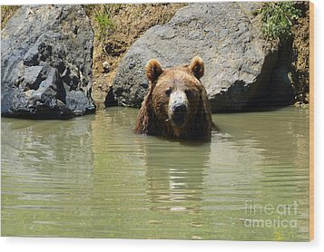 A Bear's Hot Tub Wood Print by Methune Hively