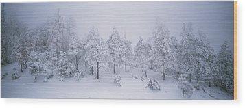 A Blizzard On Spruce Mountain Wood Print by Rich Reid