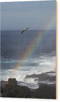 A Blue Footed Booby Soars Wood Print by Ralph Lee Hopkins