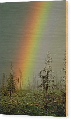 A Brilliantly Colored Rainbow Ends Wood Print by Norbert Rosing