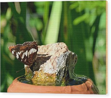 A Butterfly Enjoys A Drink Wood Print by Will Borden