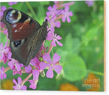 A Butterfly On The Pink Flower 2 Wood Print by Ausra Huntington nee Paulauskaite