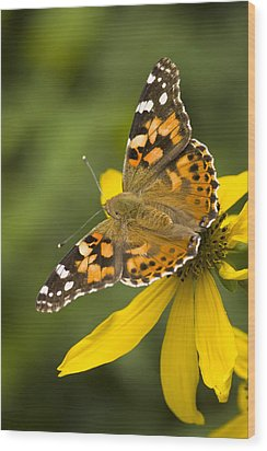 A Butterfly Sits Atop A Yellow Wood Print by Ralph Lee Hopkins