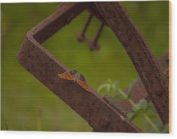A Butterflys Resting Place Wood Print by Karol Livote