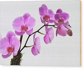 A Close-up Of An Orchid Branch Wood Print by Nicholas Eveleigh