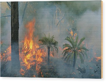 A Controlled Fire Helps Prevent Wood Print by Randy Olson