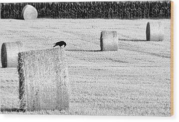 A Crow's Curiosity Wood Print by Dana Walton