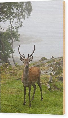 A Deer Stands In A Foggy Meadow By The Wood Print by John Short