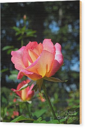 A Delicate Rose Wood Print