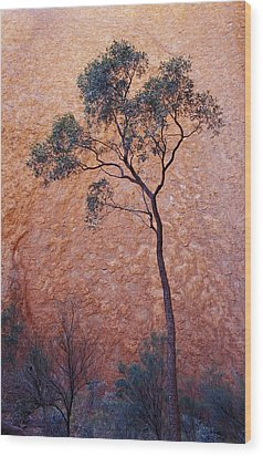 A Desert Bloodwood Tree Against The Red Wood Print by Jason Edwards