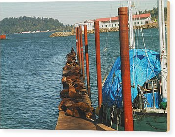 A Dock Of Sea Lions Wood Print by Jeff Swan