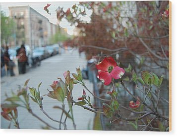 A Dogwood Grows In Brooklyn Wood Print