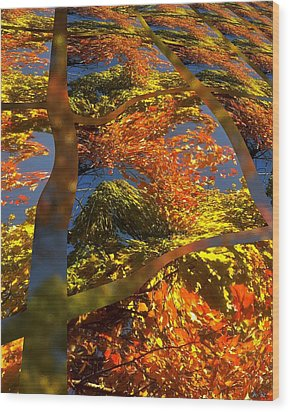 A Fall Perspective Of Color Wood Print by Rene Crystal