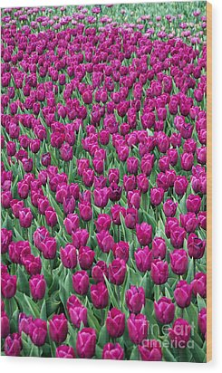 Wood Print featuring the photograph A Field Of Tulips by Eva Kaufman