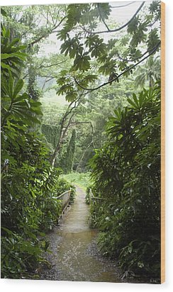 A Flooded Path At Manoa Falls Wood Print by Stacy Gold