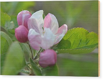 A Flower In The Wild Wood Print by Artie Wallace