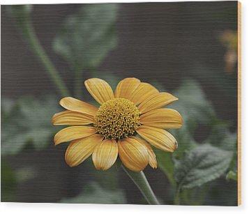 A Flowers Flower Wood Print