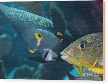 A French Angelfish Swims Up Close Wood Print by Terry Moore