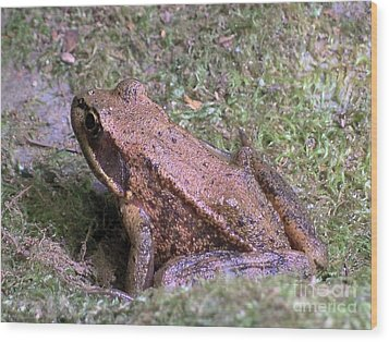 Wood Print featuring the photograph A Friendly Frog by Chalet Roome-Rigdon