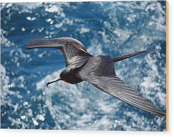 a Frigate in Flight Wood Print by Harvey Barrison