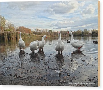 A Gaggle Of Geese 1 Wood Print by Bruce Ritchie