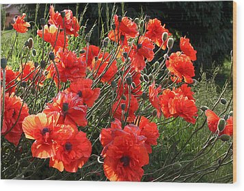 A Gathering Of Poppies Wood Print