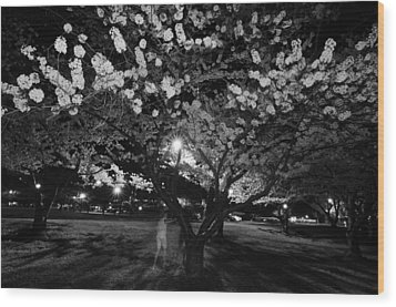 A Ghost In The Cherry Blossoms Wood Print by Shirley Tinkham