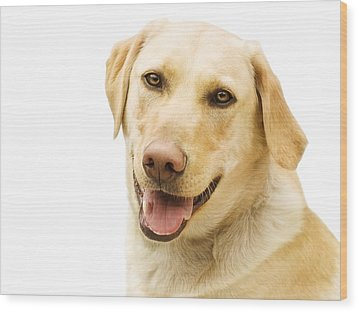 A Golden Labrador Wood Print by Chris Knorr