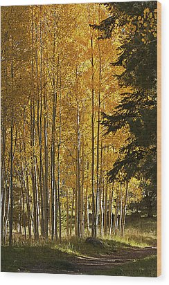 A Golden Trail Wood Print by Phyllis Denton