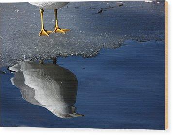 A Gull Reflects Wood Print by Karol Livote